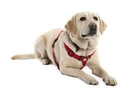 DOGOTERAPIA – edukacja z psem w naszym w żłobku!!!
